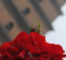 Big Wild Goose Pagoda Rose Sticker