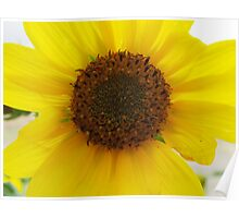 The Sunflower and the BumbleBee Series (Macro) Poster