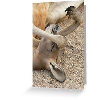 Resting kangaroo Greeting Card
