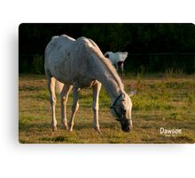 Our Morning Angel  Canvas Print