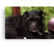 Bailley - The Patterdale Canvas Print
