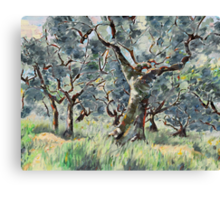 In the Umbrian Olive Grove Canvas Print