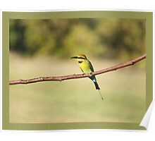 Rainbow Bee-Eater - Visual Poster