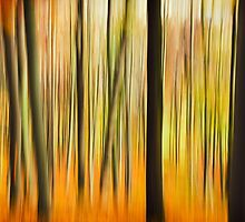 Autumn Forest Colors by novopics
