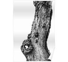 Apple Tree Trunk Poster