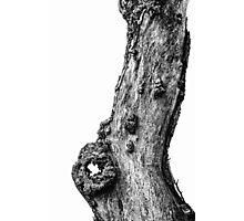 Apple Tree Trunk Photographic Print