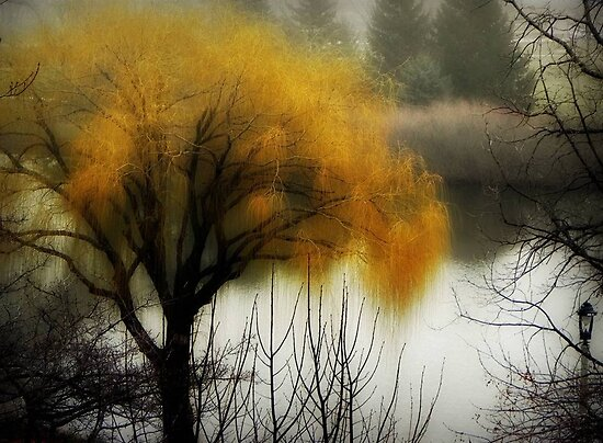 The fog rolls in... © by Dawn M. Becker