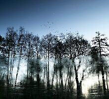 A Wintry Reflection - Virgina Water, Surrey by Will Goodwin