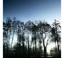 A Wintry Reflection - Virgina Water, Surrey Photographic Print