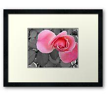 SC Pink Framed Print
