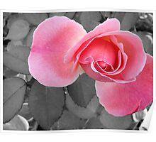 SC Pink Poster