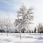 Hugged by snow (colour) by Yelena Rozov
