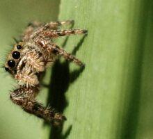 Curiosity Killed the Spider Sticker