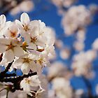 Blossoms of White by NinaJoan