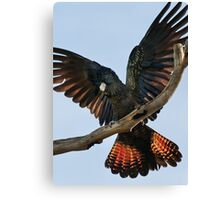 """""""Red Tailed Black Cockatoo"""" Canvas Print"""
