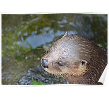Playful Otter Poster
