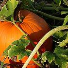 Pumpkin Patch by Nadya Johnson