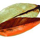 Leaves arrengement 2. by Baska