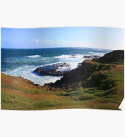 Noobies Coastline Poster
