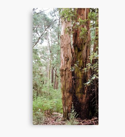 Strong Timber Canvas Print