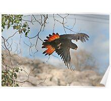 Flyaway Poster