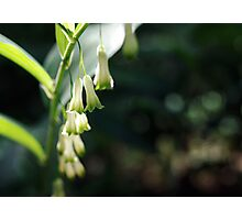 soft white bells Photographic Print