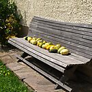 A Bench & Gourds. by Lee d'Entremont