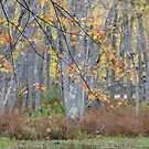 Softly Comes Autumn by Tracy Faught