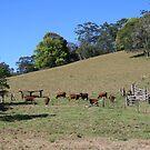 An Aussie Rural Landscape by aussiebushstick