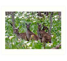 Kangaroos in the Tuart Forest Art Print