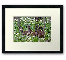 Kangaroos in the Tuart Forest Framed Print