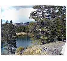 Through The Trees Tioga Lake Poster