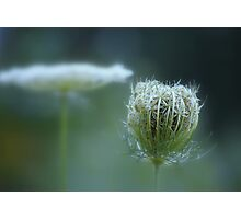Stages ~ flower & seedpod Photographic Print