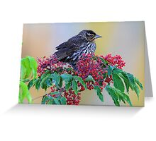 Some blackbirds are beautiful Greeting Card