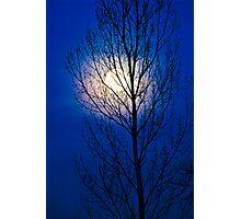 Moon Tree Photographic Print