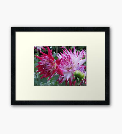 Rich coloured Framed Print