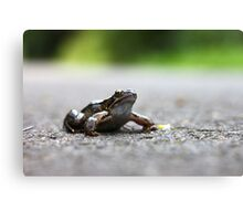 Frog in the Road Canvas Print