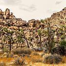 Small Joshua trees by Gerard Rotse