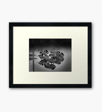Sleeping Geese Framed Print