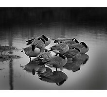 Sleeping Geese Photographic Print