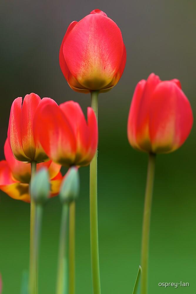 Spring! by osprey-Ian