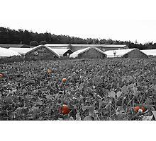 The Pumpkin Patch Photographic Print