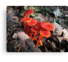 Red Waxy Caps Canvas Print