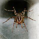 Spider by vasu