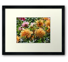 Best Selling Orange Dahlia Flower Photography art prints Framed Print