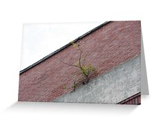 A Tree Grows Through Building!! Greeting Card