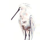 Spoonbill by Louise De Masi