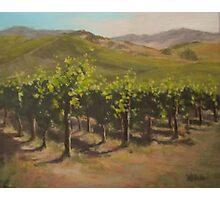 Vineyard Summer Photographic Print