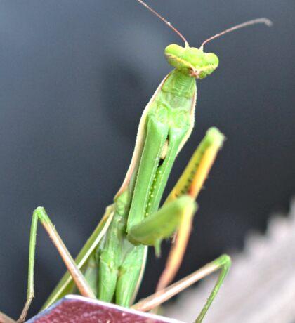 Praying Mantis Macro Photo Sticker