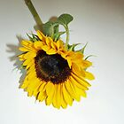 Sunflower by Bine